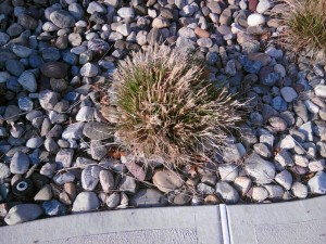 Cutting Back Tall Pool Grass