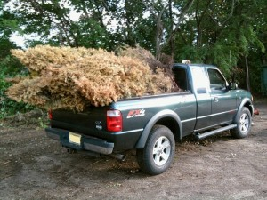 Arborvitaes to Township Brush Recycling
