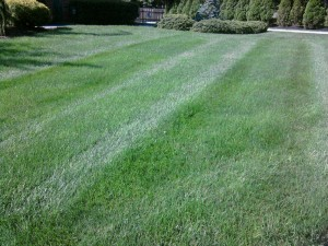 Bluegrass and Fescue Front Lawn