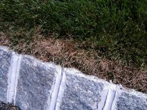 Lawn Fungus Dollar Spot 1