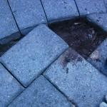 Paver Walkway Burrowing Pest