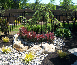 Weeping Blue Atlas Cedar and Barberry Bushes in Pool Landscaping