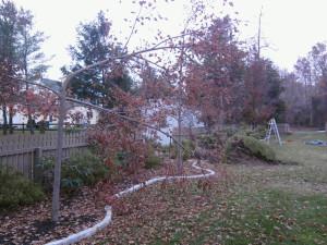 In Need of Landscape Maintenance