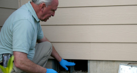 Green Pest Control: Tips for Protecting your Home and Garden this Summer