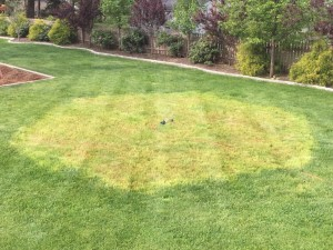 Fescue Lawn Mix Over Winter Results in Awful Lawn Patch First Pass