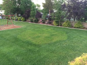 Four Weeks with Kentucky Blue Grass, Fertilizer and Water