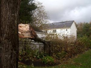 Hurricane Sandy Roof and Tree Damage