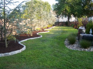 Switching From Mulch To Ground Cover All About The House